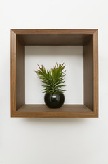 wooden wall shelf with plant pot inside
