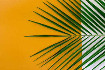 Minimal summer background concept with tropical leaves