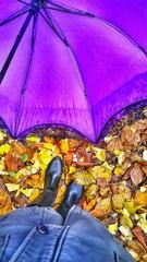 autumun leaves, nature, season