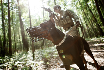 Photo of military man with dog