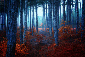 autumn  forest on misty morning