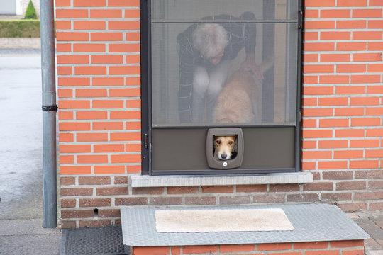 brown dog looks through cat hatch