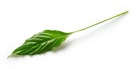 Wall Mural - fresh green tropical leaf