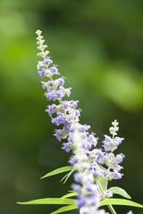 Pale Purple Sprig