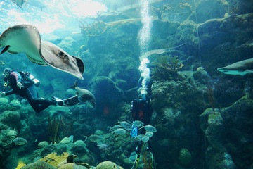Divers swim through an ocean enclosure with stingray, sharks and other fish .