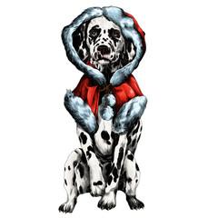 Dalmatians with a fur coat sketch vector graphics color picture
