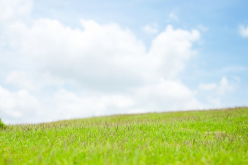 beautiful layer of green grass and blue sky cloud background.