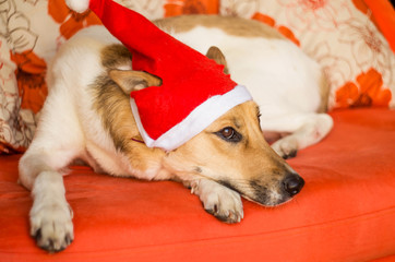 cute dog with a christmas hat with funny ears