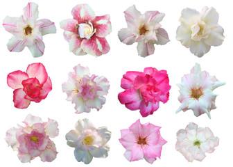 Set flowers isolated on white background