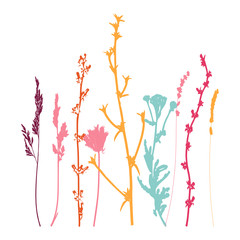 Meadow grasses, herbs and flowers outlines.