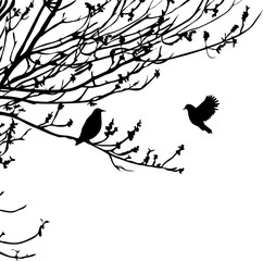 Silhouette of tree branches and bird