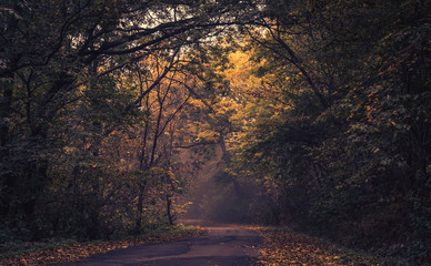 Autumn forest scenery with road