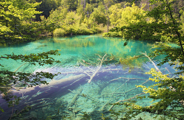 Picture taken in Croatia. Plitvice Lakes