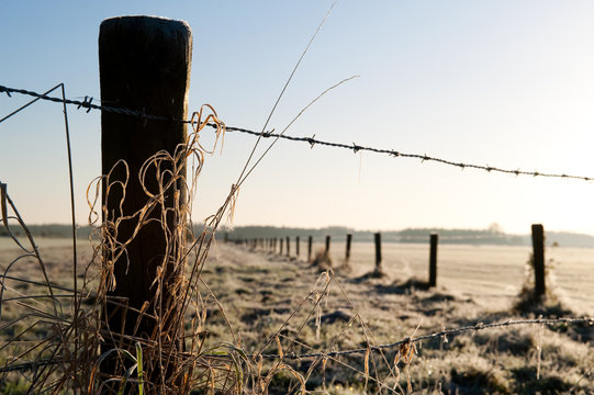 Wintertime in Holland: Barbed wire fence in a frozen field