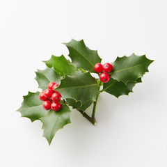 Christmas Holly With Red Berries.
