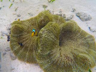 Clownfish in the underwater submarine
