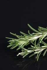 Rosemary branches isolated on the black background table with reflections
