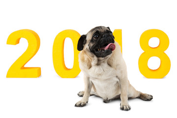A dog sitting and looking upwards on background with the inscription 2018. A symbol of the new year. Isolated.