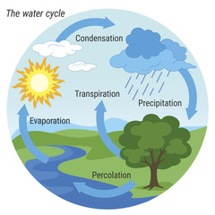 Water Cycle. Vector schematic representation of the water cycle in nature. Illustration of diagram water cycle. Cycle water in nature environment.