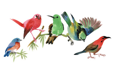 Cute colorful small birds sitting on twig on white background, watercolor painting.