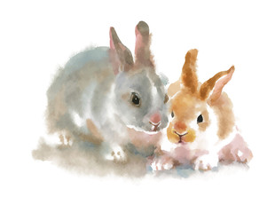 Two cute rabbits on white background, watercolor painting.