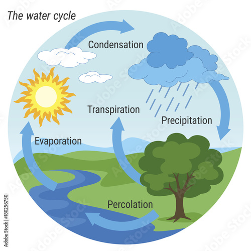 Water Cycle Vector Schematic Representation Of The Water