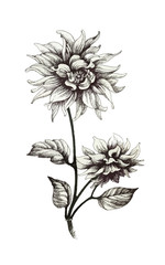 Hand drawn monochrome flowers isolated on white background.