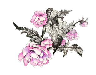 Hand drawn pink flower isolated on white background.