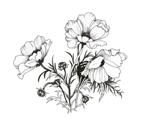 Summer garden blooming flowers monochrome illustration.