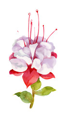 Flowers watercolor illustration. Spring and Summer.