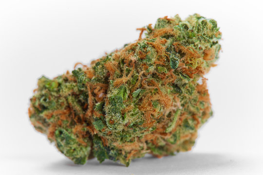 Close up of prescription medical marijuana flower Strawberry Cough sativa strain on white background