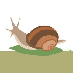 snail  on leaf flat style