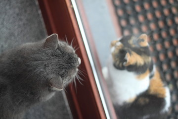Deux chats séparés