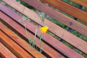 Fleurs jaunes sur un banc