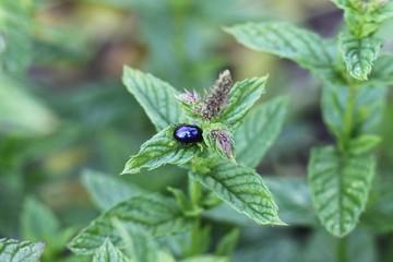 Scarabée sur plante
