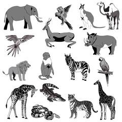 Vector illustration. Set of animals, parrot, giraffe, monkey, gazelle, elephant, rhinoceros, kangaroo, camel, lion, zebra, crocodile, snake, tiger. Black, white, gray.