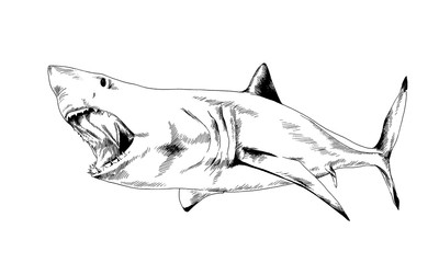 the attacking great white shark with a toothy maw hand-drawn tattoo logo