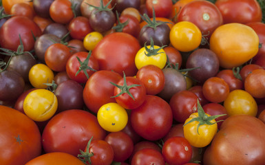 different types of home grown tomatoes harvest from greenhouse in one background, view from above