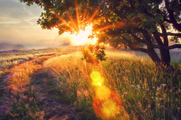 Canvas Prints Sunset Vivid sun rays through branches of tree on morning meadow at sunrise. Bright dawn with shining sunbeams.