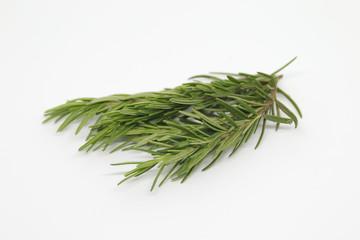 Rosemary on white background
