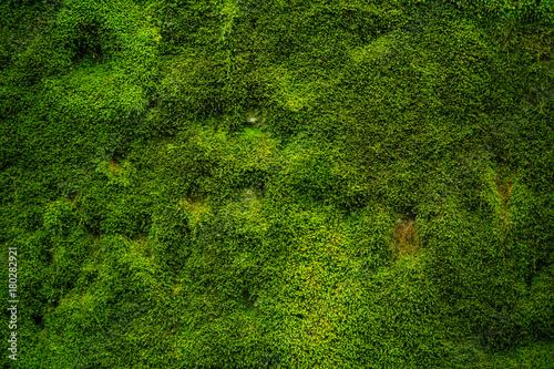 Natürliches grünes Moos als Hintergrund - Textur\