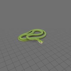 Posed green snake