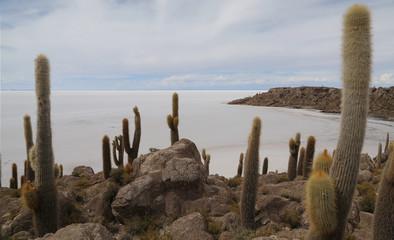 Isla de Incahuasi o del pescado en el Salar de Uyuni, Bolivia