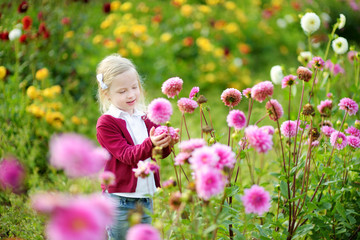 Photo sur Plexiglas Dahlia Cute little girl playing in blossoming dahlia field. Child picking fresh flowers in dahlia meadow on sunny summer day.