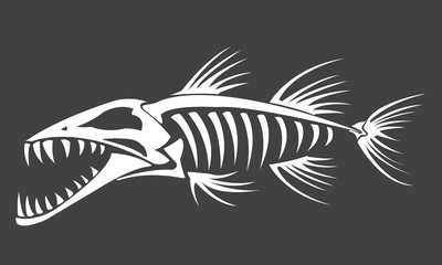 Barracuda skeleton on grey background, vector