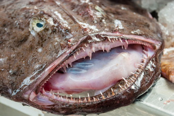 Monkfish mouth and teeth on fishmongers table