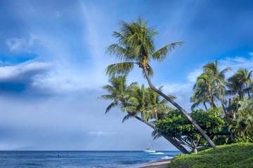 Kaanapali Beach Palm