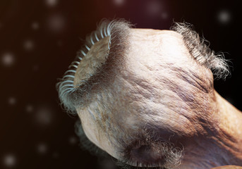 Bandwurm unter dem Mikroskop, Illustration