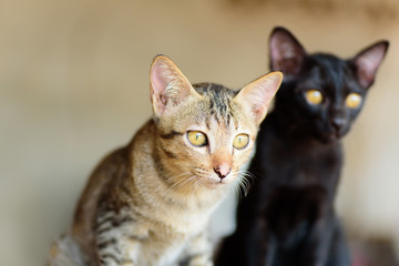 Two kittens are sitting together, cute animal and pet