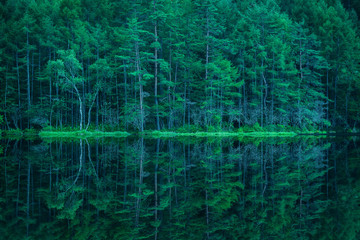 Fototapeten Wald 森林と湖 御射鹿池